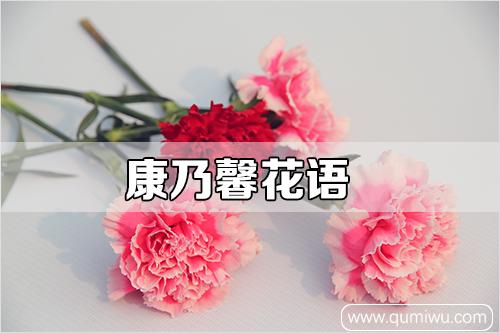康乃馨花语(花色不同花语寓意不同)